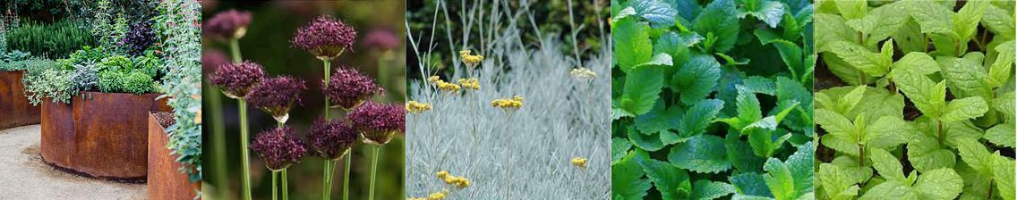 jardin-nourricier-1-liligarden