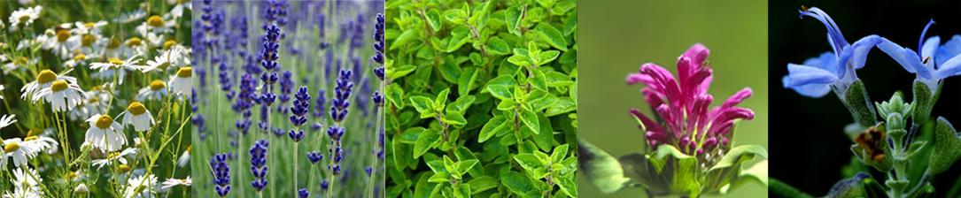 jardin-nourricier-2-liligarden