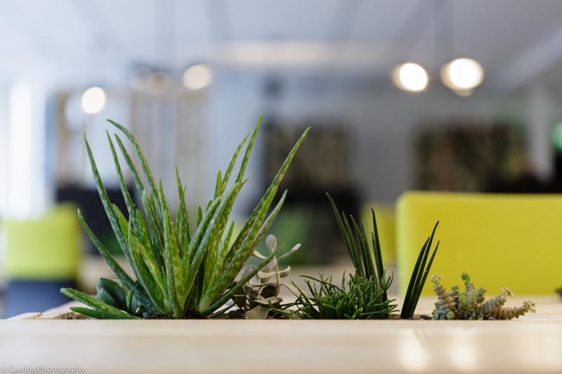 4-succulente-LiliGarden