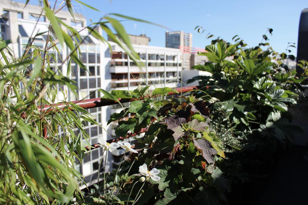 balcon-jardin-liligarden