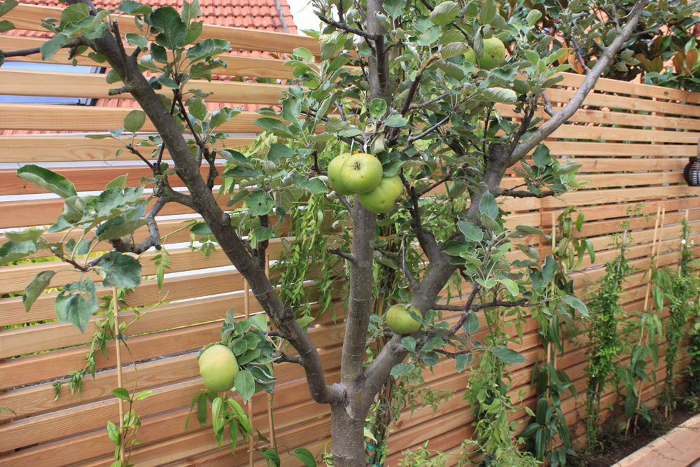 verger-terrasse-4-liligarden