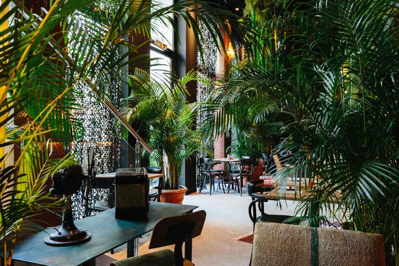 LiliGarden-KubeHotel-palmier-areca-plante-depolluante