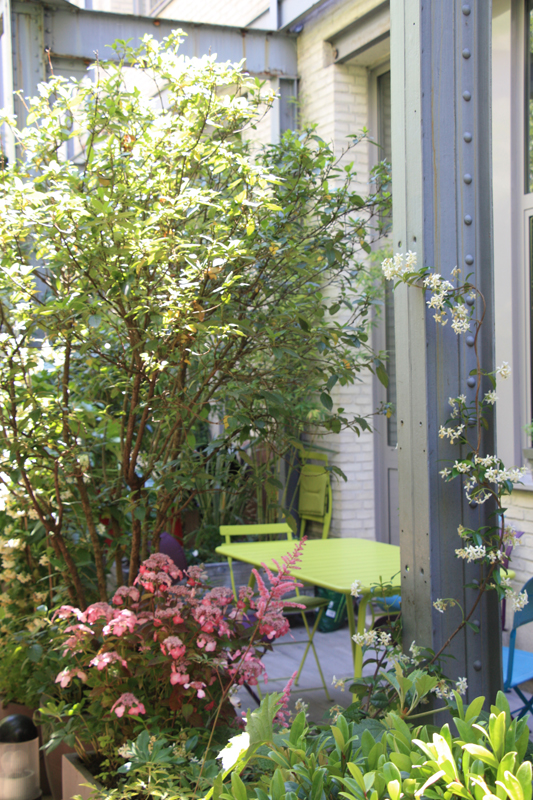 Liligarden-5-plantes-grimpantes-poutre-metal