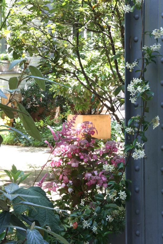 Liligarden-6-plantes-grimpantes-poutre-metal-2