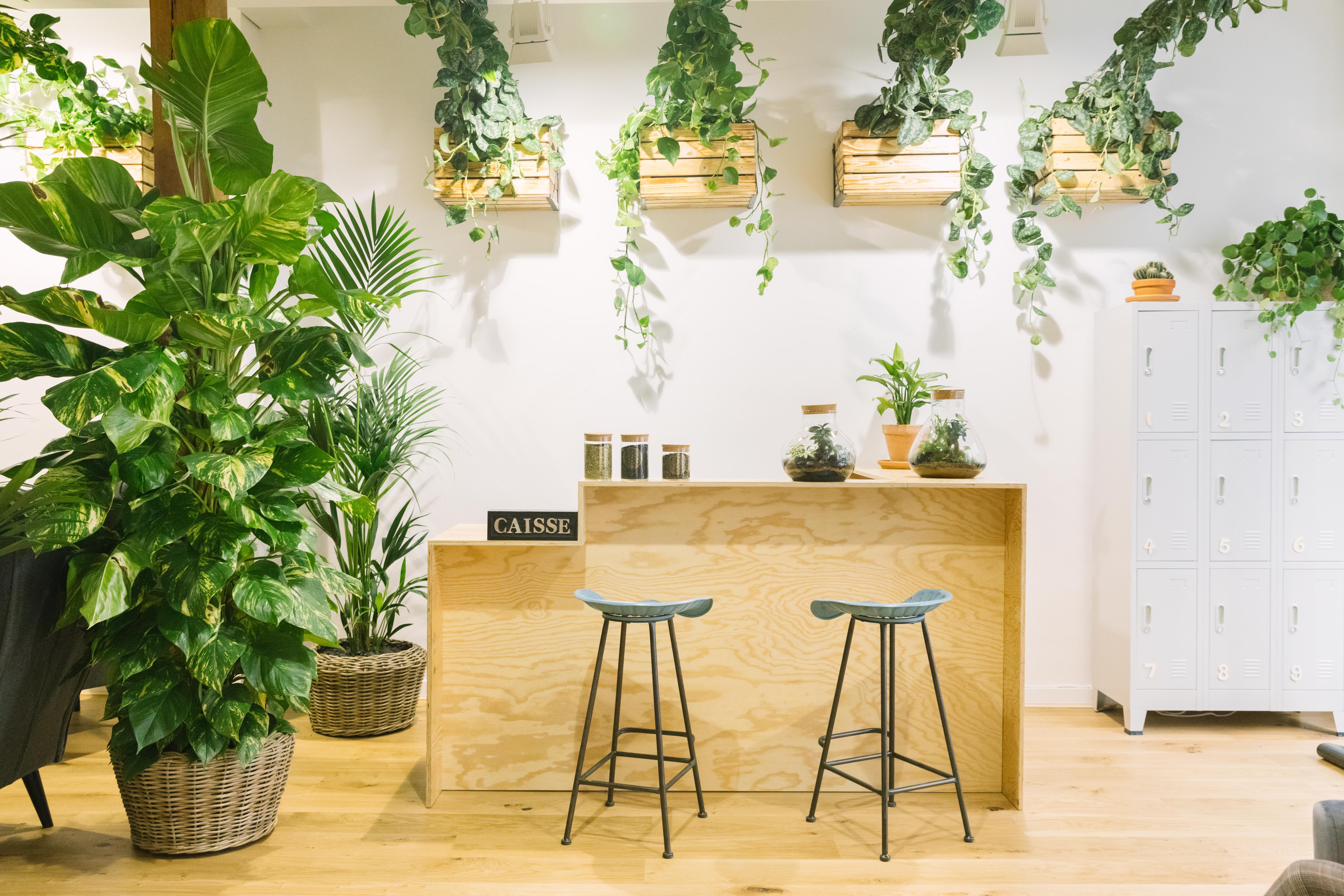 Des plantes dépolluantes du sol au plafond pour l'espace de bien-être Les Liens à côté de la Place de la République à Paris.