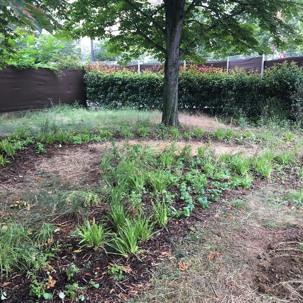 jardin de plantes tinctoriales whole (5)