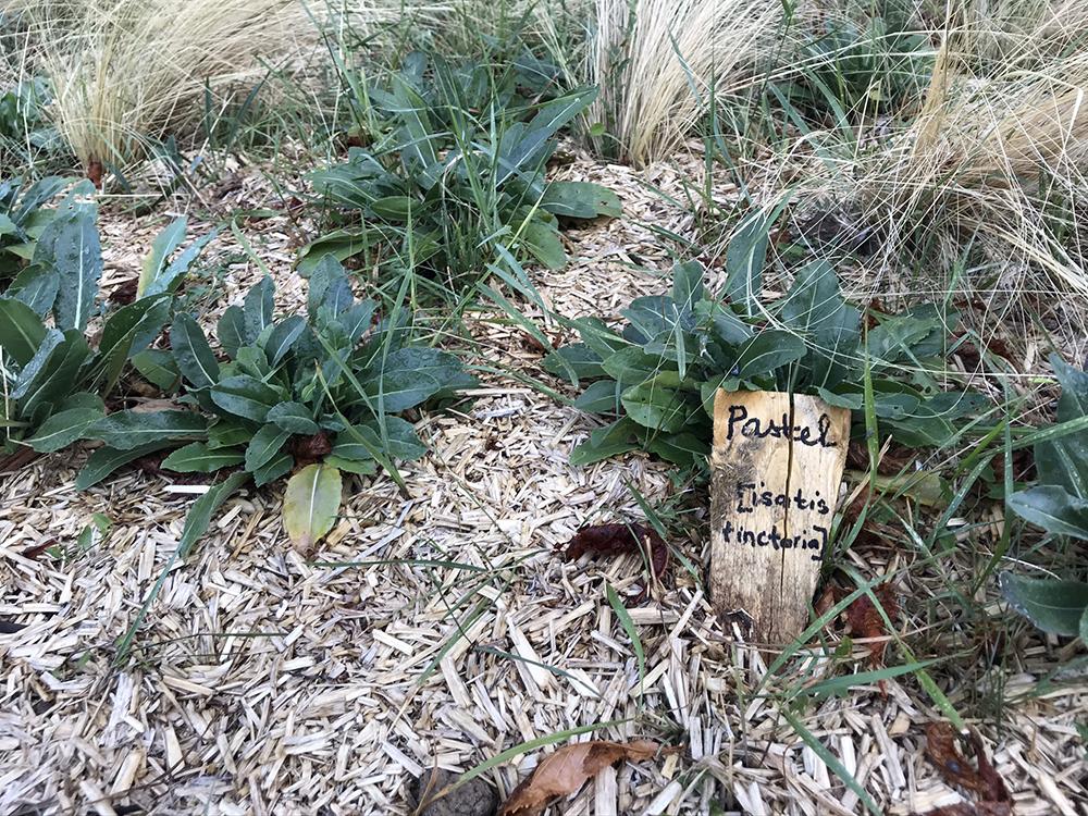 jardin de plantes tinctoriales whole (9)