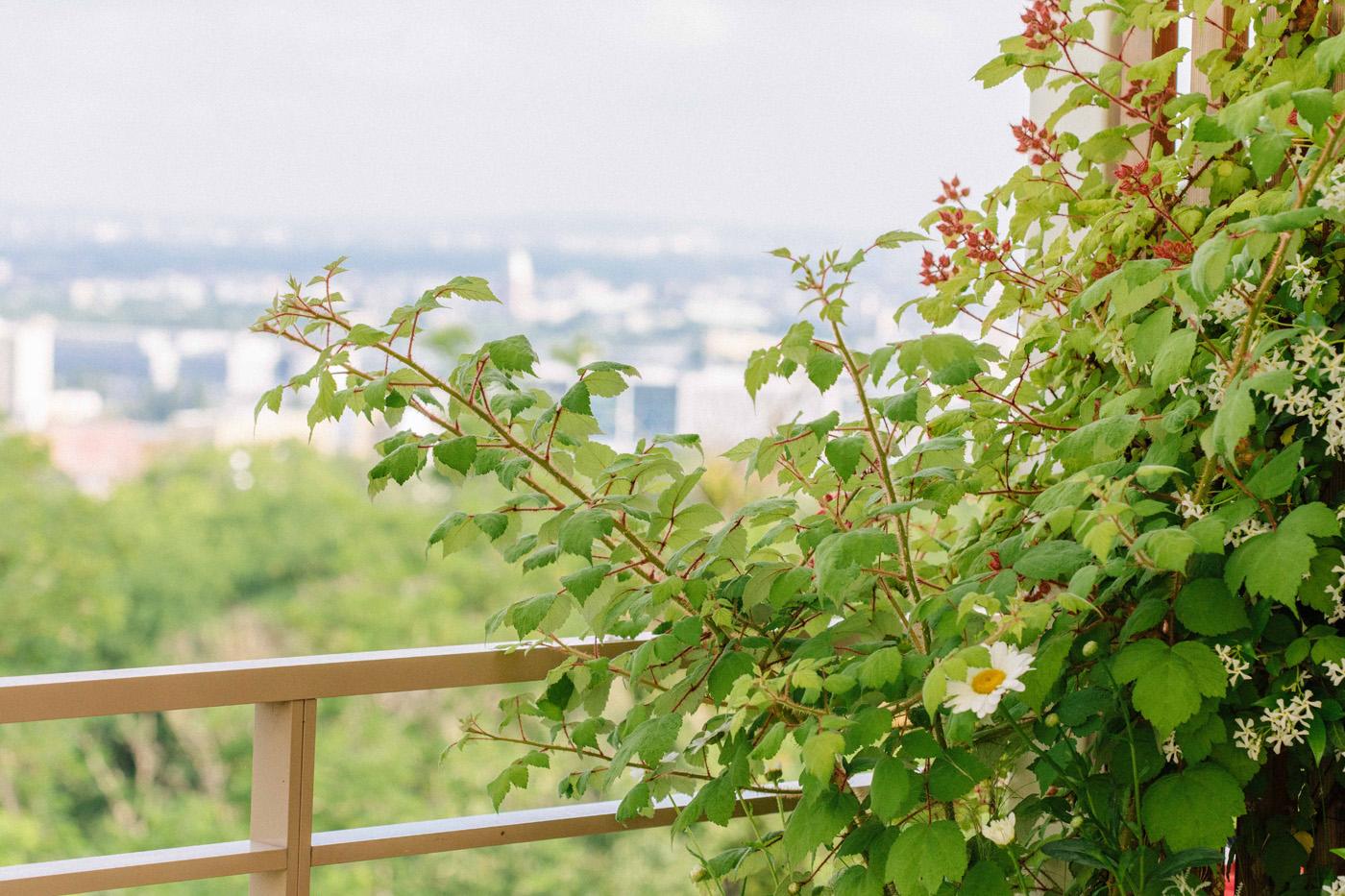 158-Lili Garden Terrasse Romainville Vegetaux